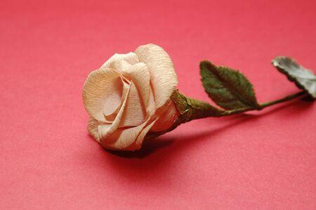 single rose photo photo