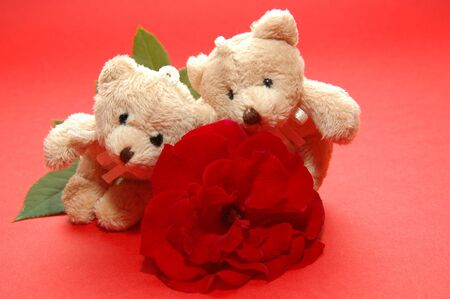 bear close up with the rose photo