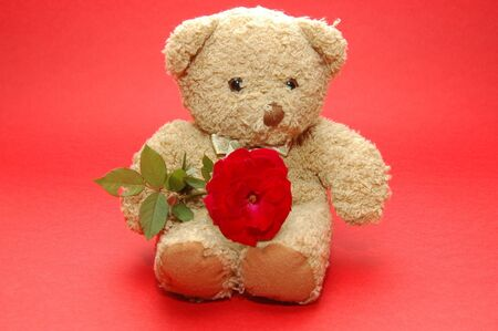bear holding a rose photo