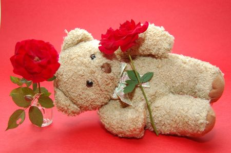 bear sleeping with two rose photo