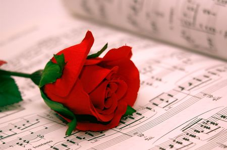 rose with red background photo