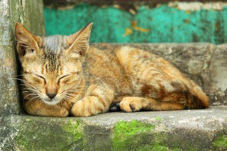 innate: Il gatto (kitten) vicino ad un portello, questo gatto selvaggio (kitten) � preso ad una casa molto vecchia come priorit� bassa. Il fiammifero di colore della priorit� bassa con il gatto (kitten)