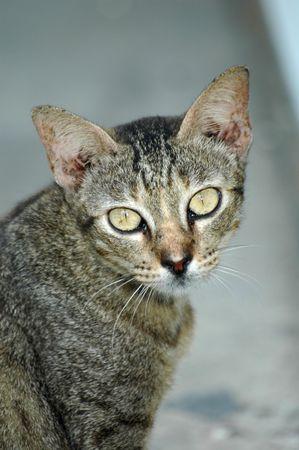 innate: Cat (kitten) accanto a una porta, il gatto selvatico (kitten) � preso molto a una vecchia casa come sfondo. Il colore di sfondo di corrispondenza con il gatto (gatto)