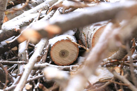 sawn: numerous sawn wooden logs and small twigs in the snow Stock Photo