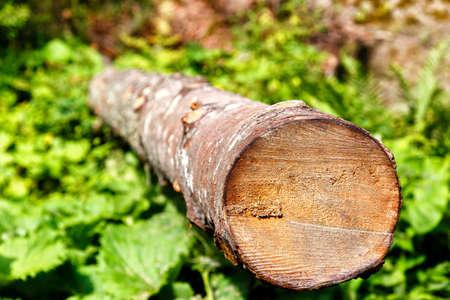 felled: Long felled logs lying on the green grass Stock Photo