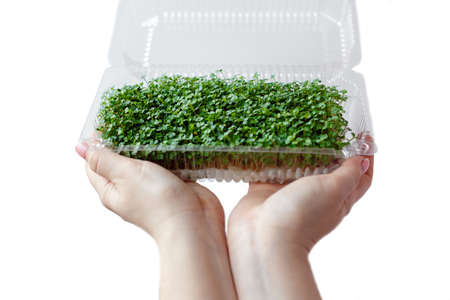 Woman holds and cares for sprouts of micro greens plants in a plastic box, hands close-up, isolated on white background. Reklamní fotografie