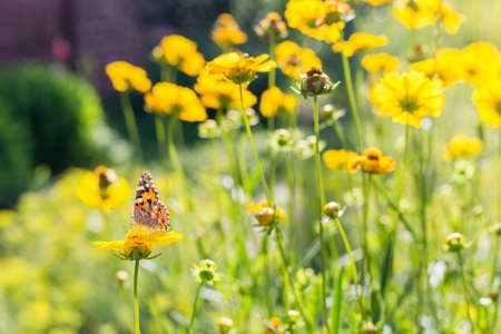 Butterfly on a yellow flowers at sunny summer day.