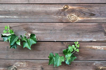 Texture of wooden fence with green leaves, horizontal logs frame background.