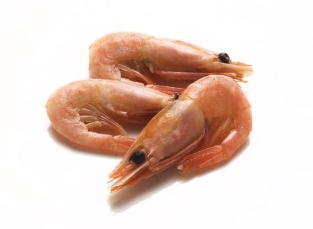 coldwater: Coldwater shrimps Stock Photo