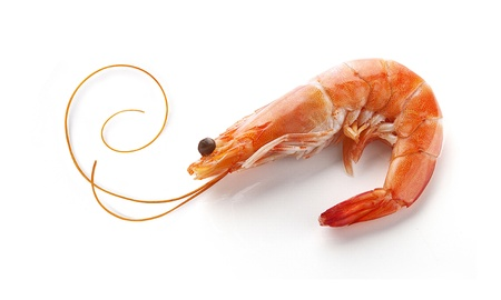 whisker: Alone isolated hot-water shrimp with the whisker on the white
