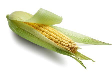 One isolated corncob on the white