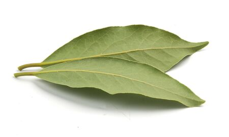 bay leaf: Two leaves of bay leaf on the white
