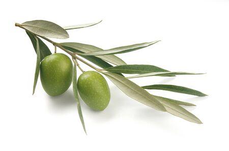 rama de olivo: Alejado de oliva Foto de archivo
