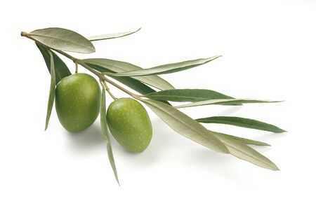 branch: Isolated olive Stock Photo