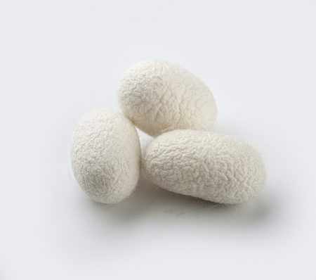 Three cocoons of the silkworm on the white background