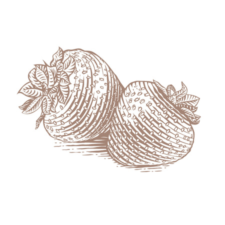 gravure: Drawing of the two isolated strawberries