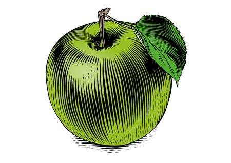 白い背景の上の隔離されたアップルの図面