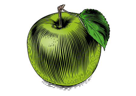 Drawing of isolated apple on the white background