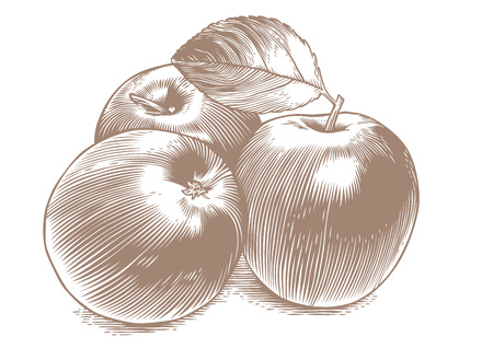 avuç: Drawing of three fresh green apples with leaf on the white Çizim