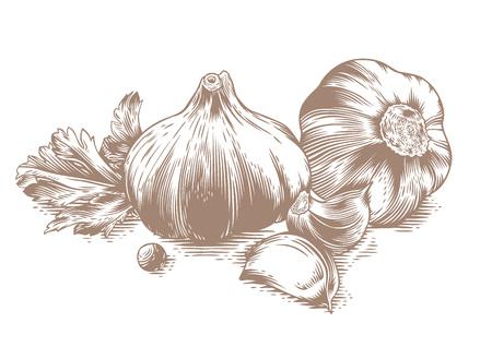 ajo: Dibujo de dos cabezas de ajo con dos dientes de ajo