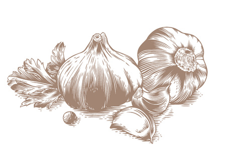 garlic: Drawing of two head of garlic with two cloves of garlic