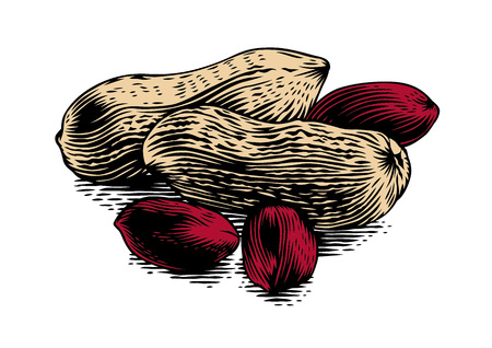 produce product: Handful of peanuts kernelds with shelled peanuts on the white Illustration