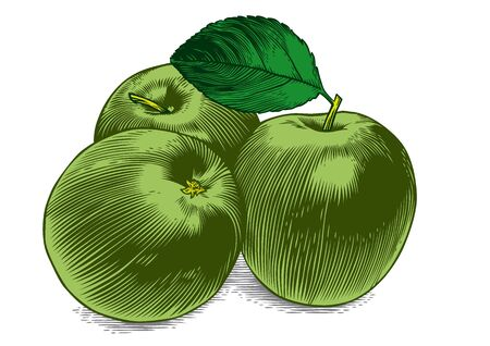 Drawing of three fresh green apples with leaf on the white