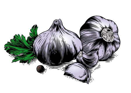 cloves: Drawing of two head of garlic with two cloves of garlic