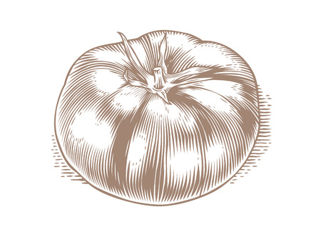 gravure: Drawing of isolated tomato on the white background