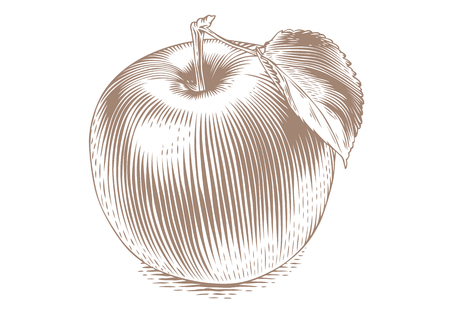 gravure: Drawing of isolated apple on the white background