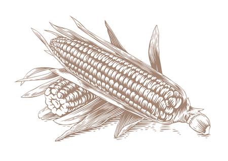 白い背景の上の葉 2 つコーンコブスの図面
