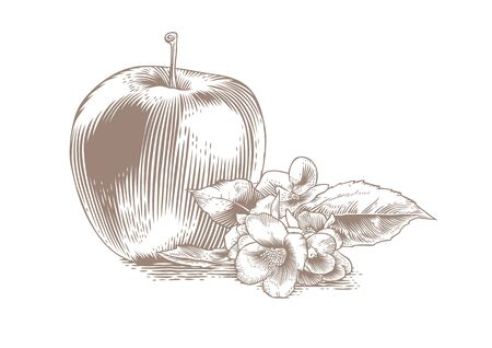 gravure: Isolated apple with flowers and leaves on the white background