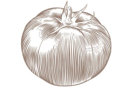 白い背景の上のトマト全体の図面