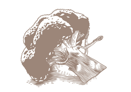 gravure: Drawing of inflorencence of broccoli on the white background Illustration