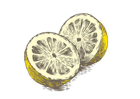 gravure: Drawing of two halves of lemon on the white background