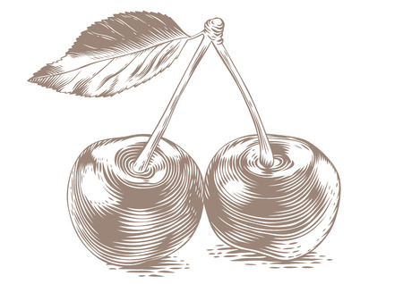Drawing of two cheries with fresh leaf on the white background