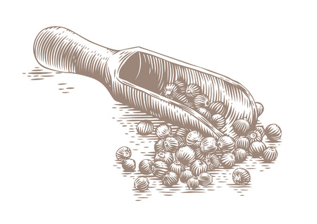 condiment: Drawing of wooden scoop with black peppers on the white Illustration