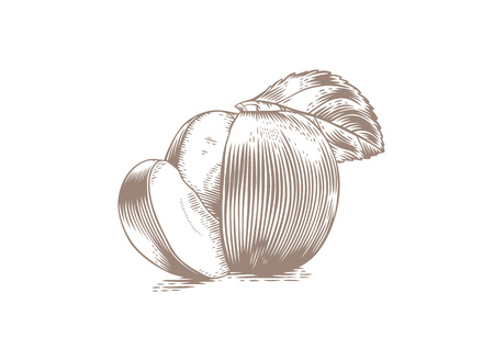 Drawing of apple with segment and leaf
