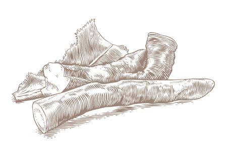 Zeichnung von Meerrettich mit dem Blatt