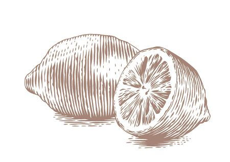 gravure: Drawing of whole and half lemon on the white background