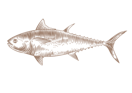 gravure: Drawing of isolated raw tuna on the white background