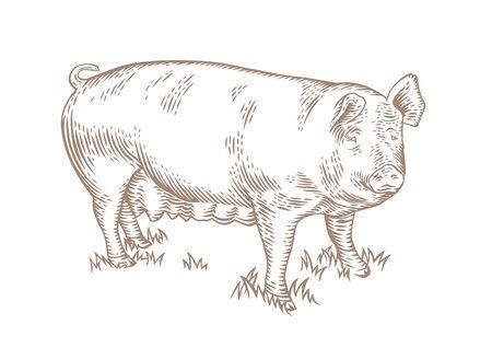Dessin du porc sur l'herbe verte