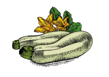 marrow: Drawing of two marrow squashes with flowers and fresh green leaves