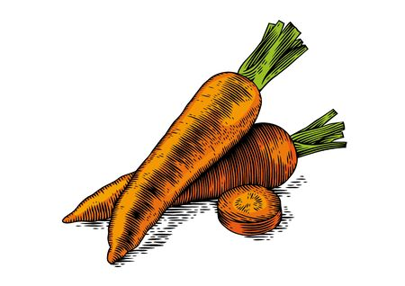 gravure: Drawing of two whole fresh carrots with slice on the white background Illustration