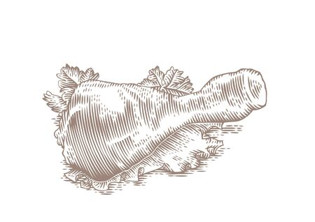 gravure: Drawing of froed chicken leg with fresh green lettuce and parsley