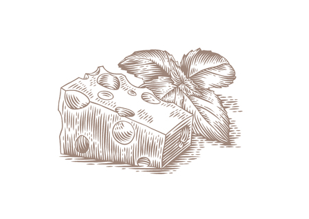 gravure: Drawing of piece of cheese with purple basil