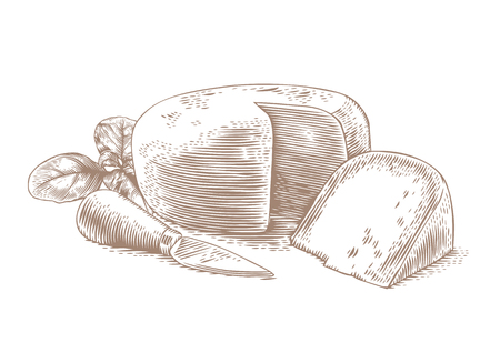 cheese knife: Drawing of head of cheese with cheese knife and fresh green basil Illustration
