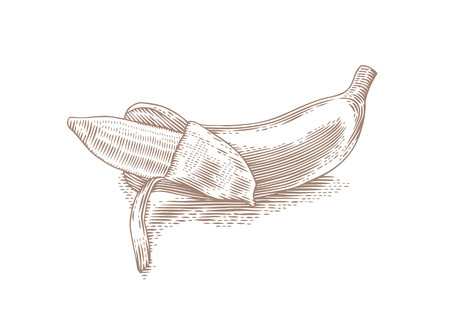 partially: Drawing of isolated yellow partially peeled banana on the white