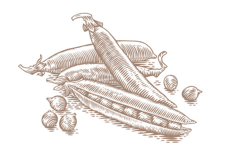 Drawing of handful of pea pods with peas Illustration