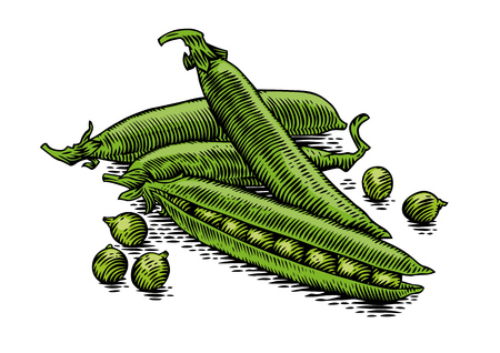 Drawing of handful of pea pods with peas Ilustração